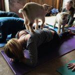 Gaot Yoga 2