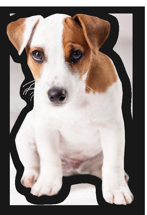 puppy-cutout